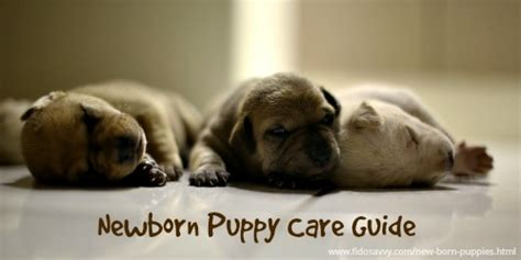 how to take care of newborn puppies how to care for new born puppies