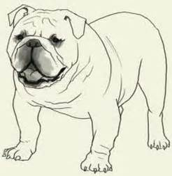 bulldog pictures color free coloring pages art coloring pages