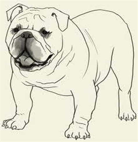 bulldog coloring pages bulldog coloring page coloring pages org
