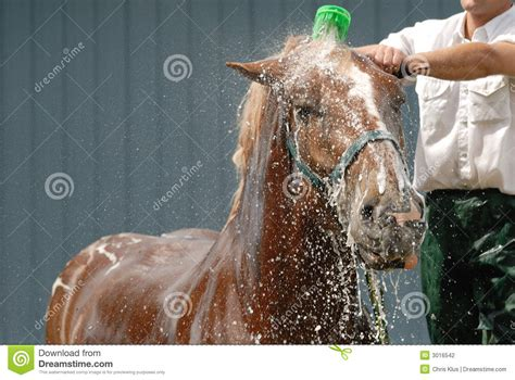 horse bathroom horse shower stock photography image 3016542