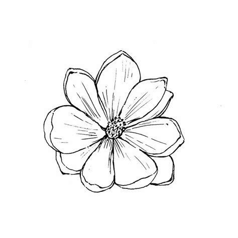 Outline Sketches Of Flowers by 1000 Ideas About Flower Outline On Tattoos Single Tattoos And Lotus