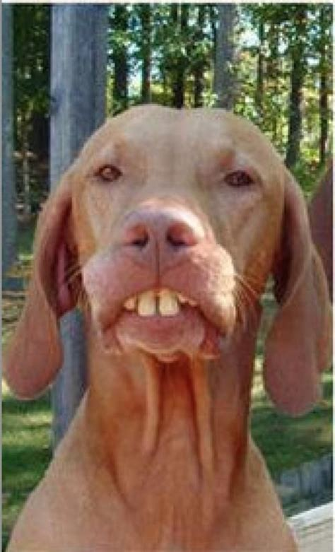 Buck Teeth Meme - dog buck teeth animals with teeth pinterest teeth