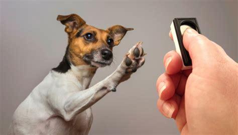 clicker dogs clicker