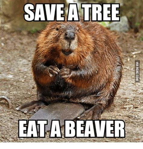 Beaver Meme - save a tree eat a beaver tree meme on sizzle