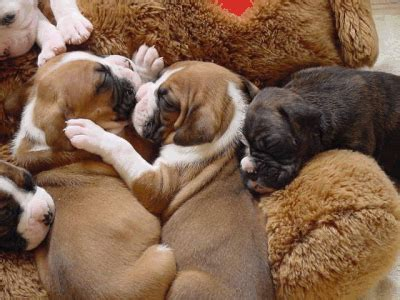 cuddling puppies cuddling puppies pictures and images