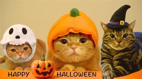 Halloween Cat Meme - 35 funny halloween memes pictures entertainmentmesh