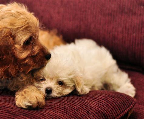puppies cuddling cuddle puppies by mjag on deviantart