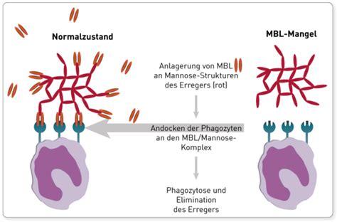 protein z mangel mannose bindendes lektin mbl imd institut f 252 r