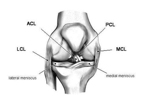 arthroscopic acl uw orthopaedics and sports medicine