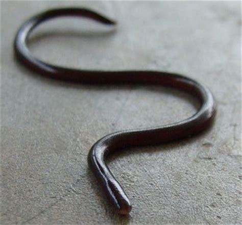 Kaos 3d Snake Uk L slimy worm creepypasta wiki fandom powered by wikia