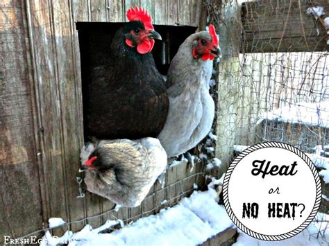 161 best backyard chicken care health images on