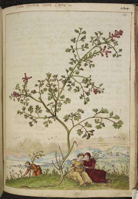 libro botany for the artist 821 best libros de vegetabilibus растения medieval manuscripts botanical images on