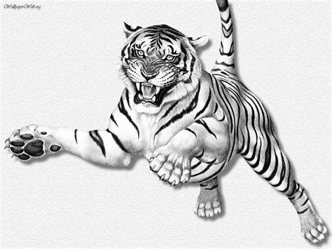 Sketches 1080p by Wallpaper Hd Sketch Tiger Hd 1080p Wolf Wallpapers Hd