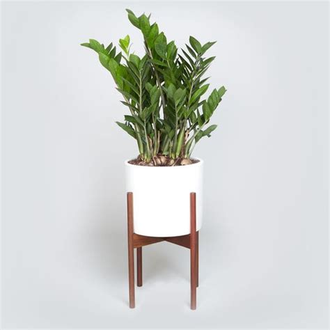 10 low maintenance indoor plants for the brisbane climate