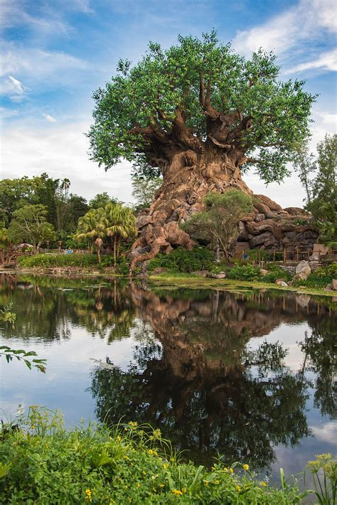 tree of life tree of life disney wikipedia