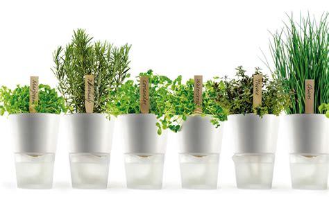 erbe aromatiche in vaso coltivare le erbe aromatiche in vaso