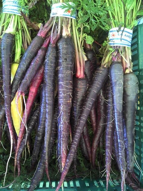 original color of carrots perceptionsense the true color of carrots
