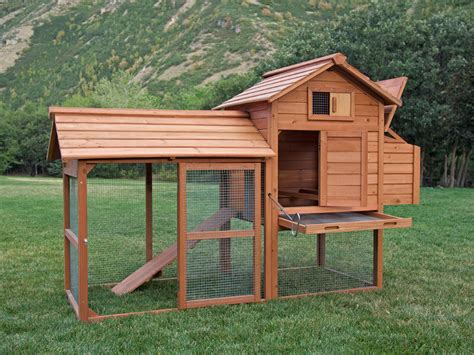 how to build a chicken coop prepper steve
