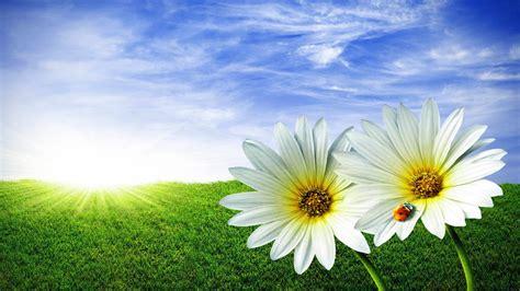 interesantes y bonitos fondos de escritorio de flores fondo pantalla flores y sol
