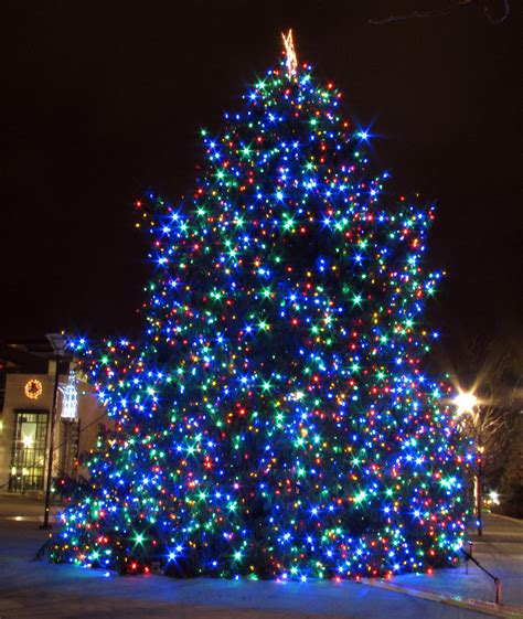 nashville s 2010 christmas tree located in the public