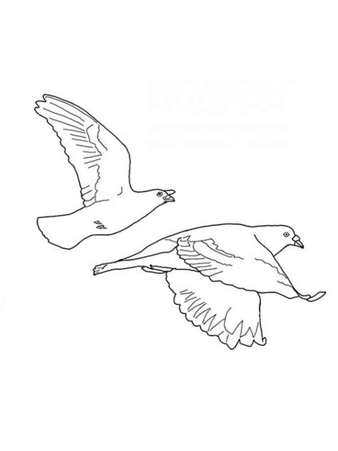 coloring pages dove bird dove bird coloring page for kids doves birds coloring