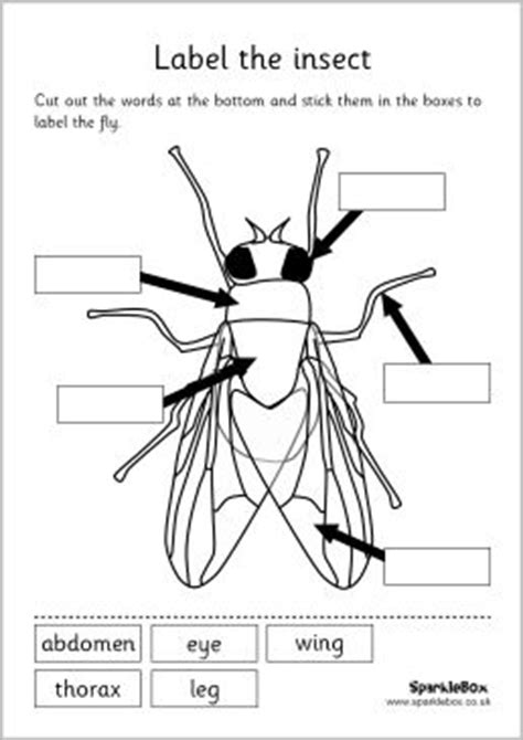 insect body sections mfw k insect unit label the insect set worksheet