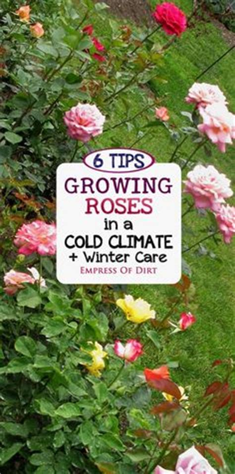 1000 images about gardening in cold weather on pinterest