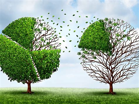 Trees Shed Leaves by Enhance Study Had Impact On Ezetimibe New Users Stoppages