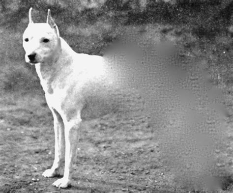 ghost puppy legend of ghost explained county yourgv