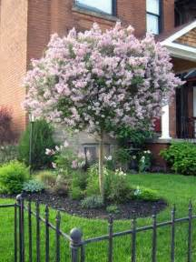 best trees to plant in your front yard 25 best ideas about trees on