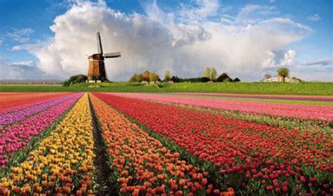 ci di fiori in olanda la strada dei fiori in olanda un tripudio di colori e profumi