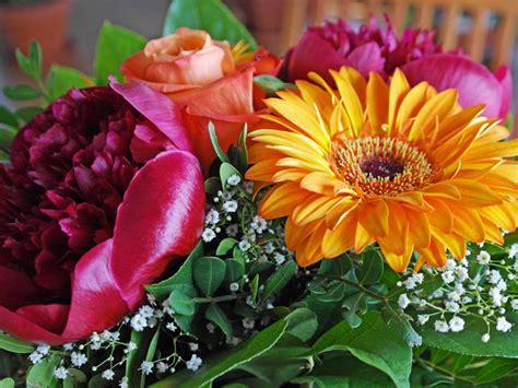 pochi fiori sanremo assofioristi pochi fiori italiani e non per