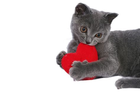 cat valentines the cat s meow 10 diy gifts for your a