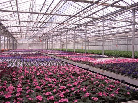 centro co dei fiori florpagano di antonio pagano co mercato dei fiori