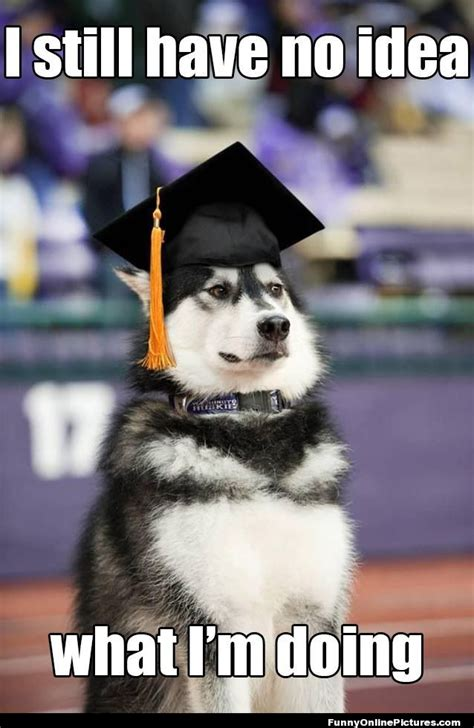 puppy graduation the gallery for gt graduation meme