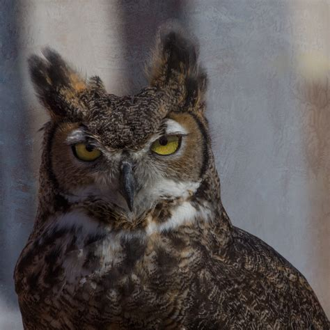 L Owl by Owls And Everything I About Them Judy Lindo