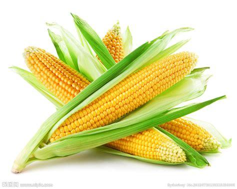 el corn clsicos de 玉米摄影图 食物原料 餐饮美食 摄影图库 昵图网nipic com