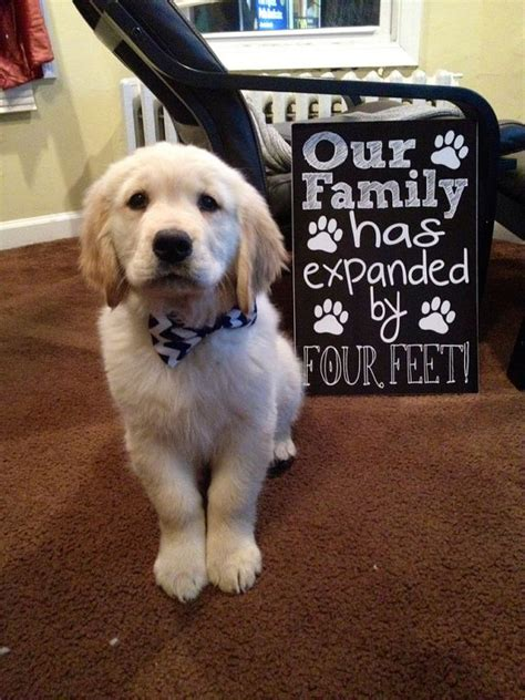 puppy announcement new puppy announcement our family has by customchalkposters