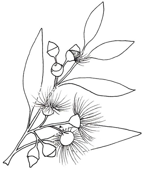 coloring pages of australian flowers 3 branches of government tree sketch coloring page