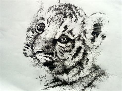 baby tiger tattoo designs awesome black grey ink realistic baby tiger design