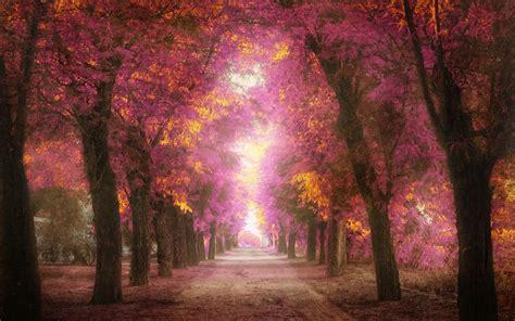 imagenes para fondo de pantalla romanticas imagenes zt descarga fondos hd fondo de pantalla