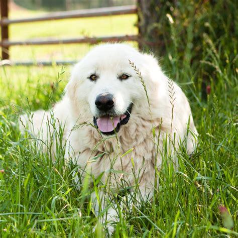 farm dogs farm dogs