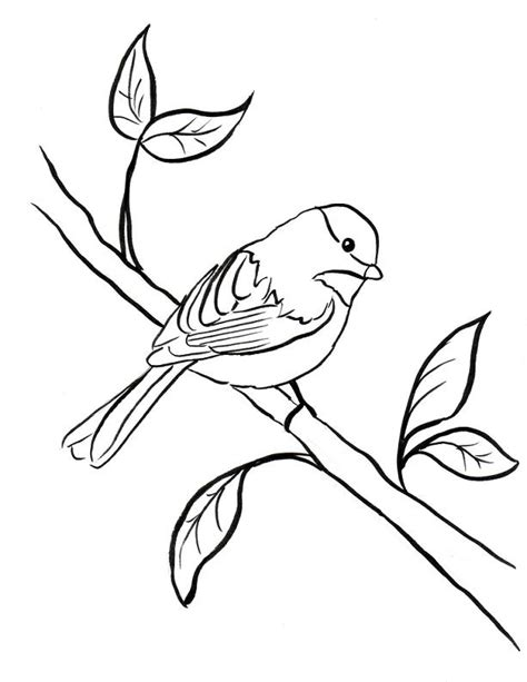 chickadee bird coloring page chickadee coloring page samantha bell