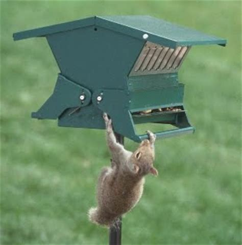 keep squirrels out of bird feeders bird feeders