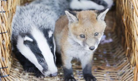 cute animals adorable pictures  abandoned baby fox