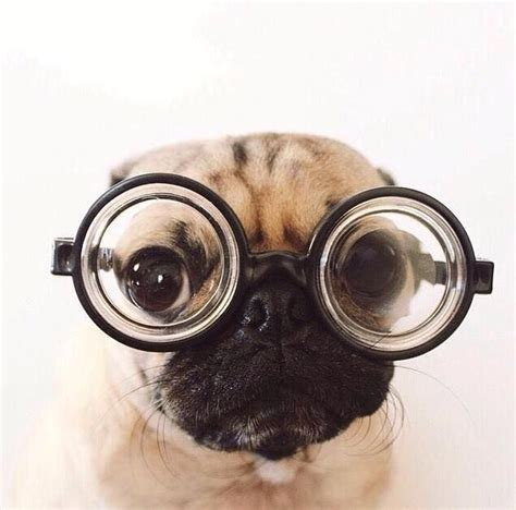 goggles for pugs 1000 ideas about on eye makeup makeup for and makeup