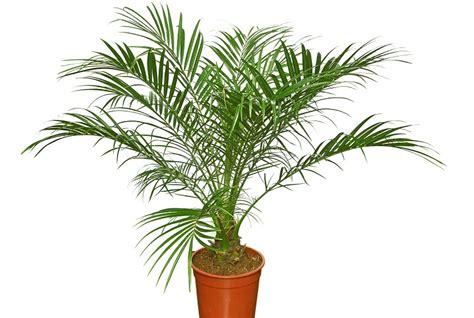 luftreinigende pflanzen schlafzimmer luftreinigende pflanzen top 10 f 252 r weniger schadstoffe