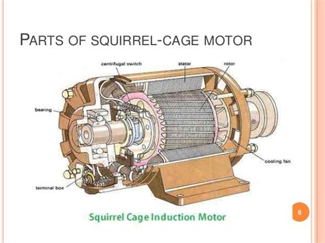 squirrel cage rotor induction motor the squirrel cage induction motor