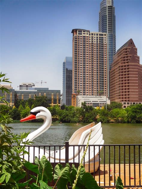 swan boats austin swan boat in downtown austin texas free summer photos