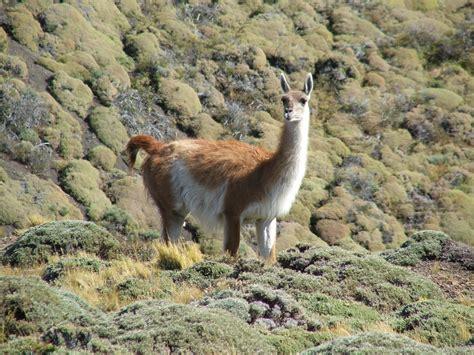 wild animals of the wild animals in the field wired